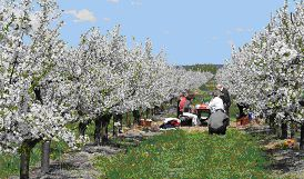 Frühling: Blüten-Radreise ins Potsdamer Havelland