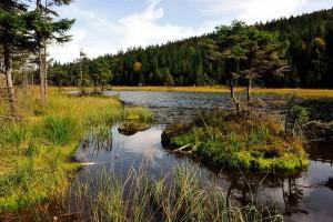 Wandern in der Gruppe – Nationalpark Bayerischer Wald