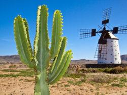 Fuerteventura für Singles 4