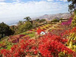 Singlereise Madeira 1