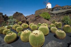 Singlereise Lanzarote 1
