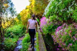 Singlereise zur Blumeninsel Madeira 5