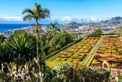 Singlereise zur Blumeninsel Madeira 1