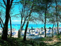 Singlereise nach Mallorca 5