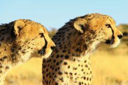 Namibia Rundreise für Singles 5