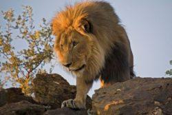 Namibia Rundreise für Singles 1