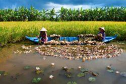 Vietnam Rundreise 3
